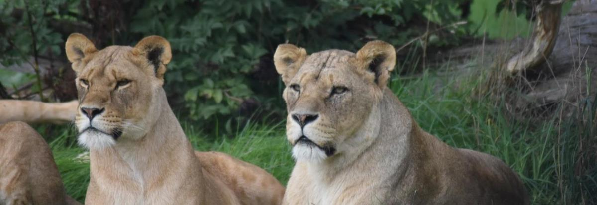 Woburn Safari Park Bedfordshire