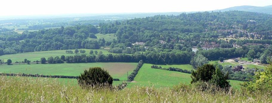 Box Hill in Surrey